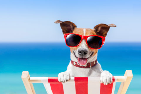 The Storage Inn blog's latest post is about Keeping Your Pet Cool in the Summer