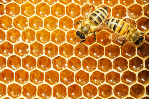 The Storage Inn blog's latest post is about National Honey Month