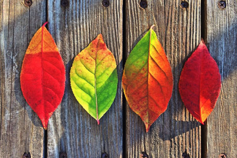 The Storage Inn blog's latest post is about Top 10 Fun Fall Facts